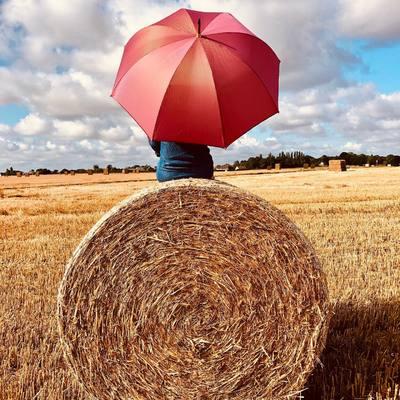 ☂️PARAPLUIE☂️ Le temps des moissons... Qu'est-ce qui est rond, et avec de jolis reflets dorés? Retrouvez notre petit nouveau ➡️ http://bit.ly/rose-dore #parapluie #doré #été #summer #rose #madeinfrance #h2oparapluies