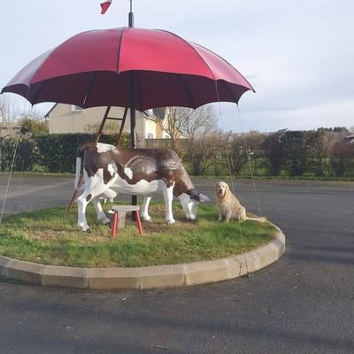 ☂️La boutique☂️  Cette semaine c'est le retour du soleil, nous avons donc ressorti notre magnifique vache sous son grand parapluie qui est installé sur notre parking☀️ Venez nous rendre visite pour pouvoir l'apercevoir☂️